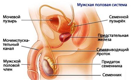 Воспалительный процесс у мужчин