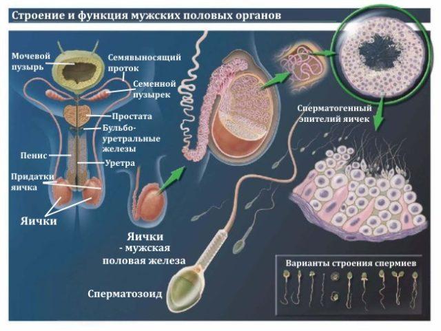 Посев спермы на чувствительность к антибиотикам