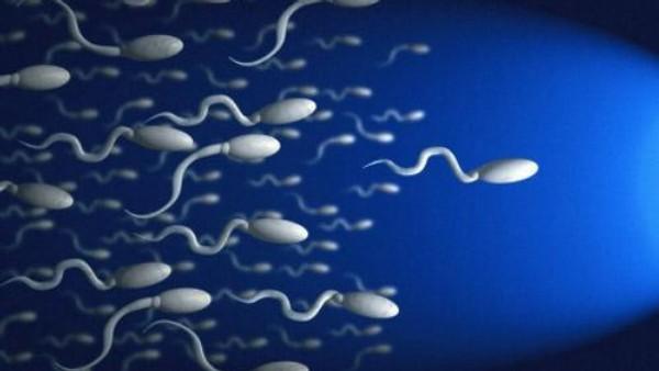 Как увеличить подвижность и активность сперматозоидов