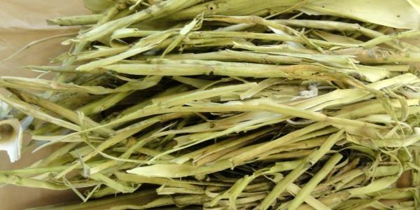 Кора осины при аденоме простаты: лечение, рецепты отваров