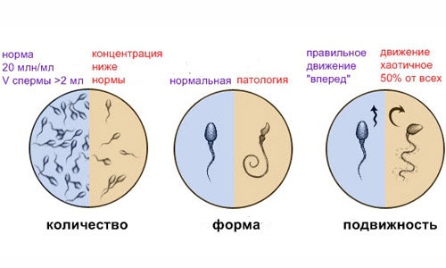 Как улучшить качество спермы для зачатия ребенка?