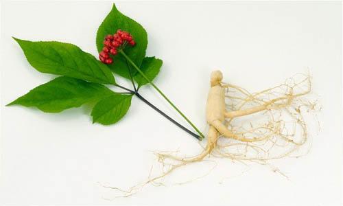 Травы для повышения потенции у мужчин – травяной сбор, противопоказания.