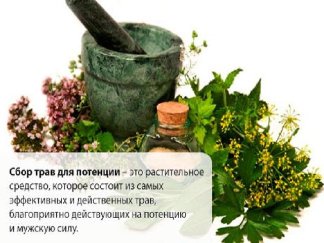 Травы и сборы для повышения потенции у мужчин: список трав для поднятия тестостерона. Настойки лимонника, пустырника и женьшеня для потенции